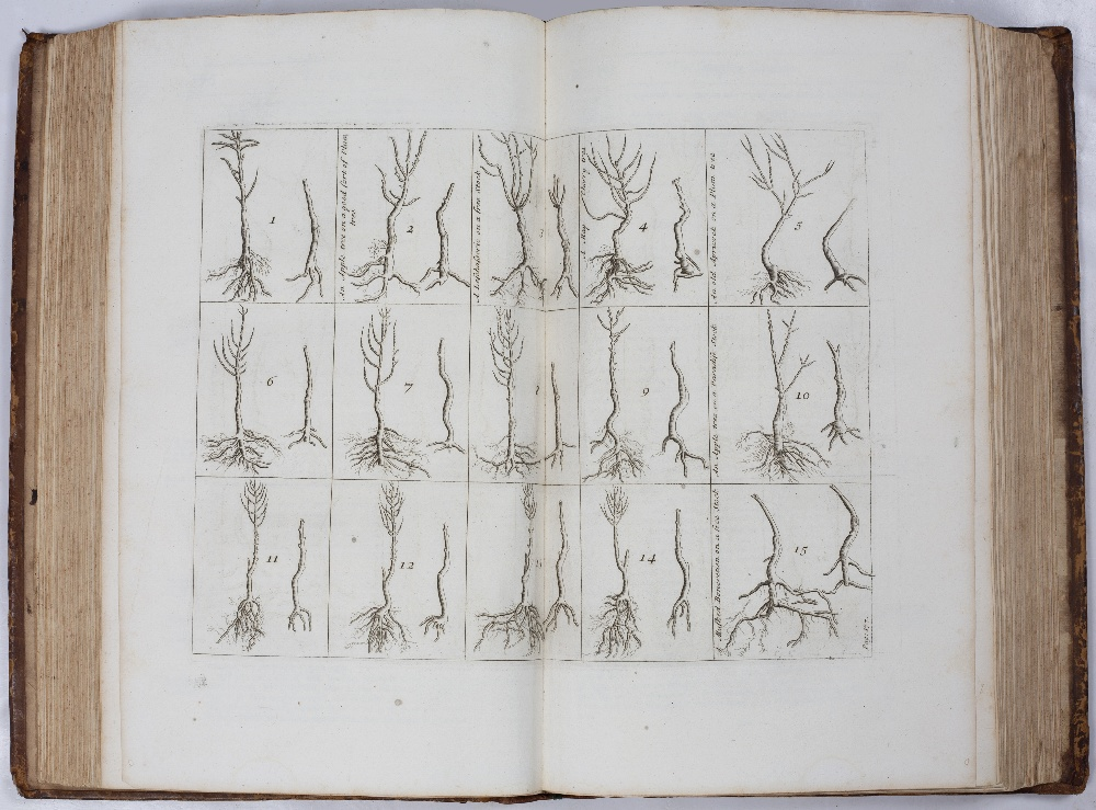 LA QUINTINYE, Jean de, 'The Compleat Gard'ner; or Directions for Cultivating and Right Ordering of - Image 4 of 10