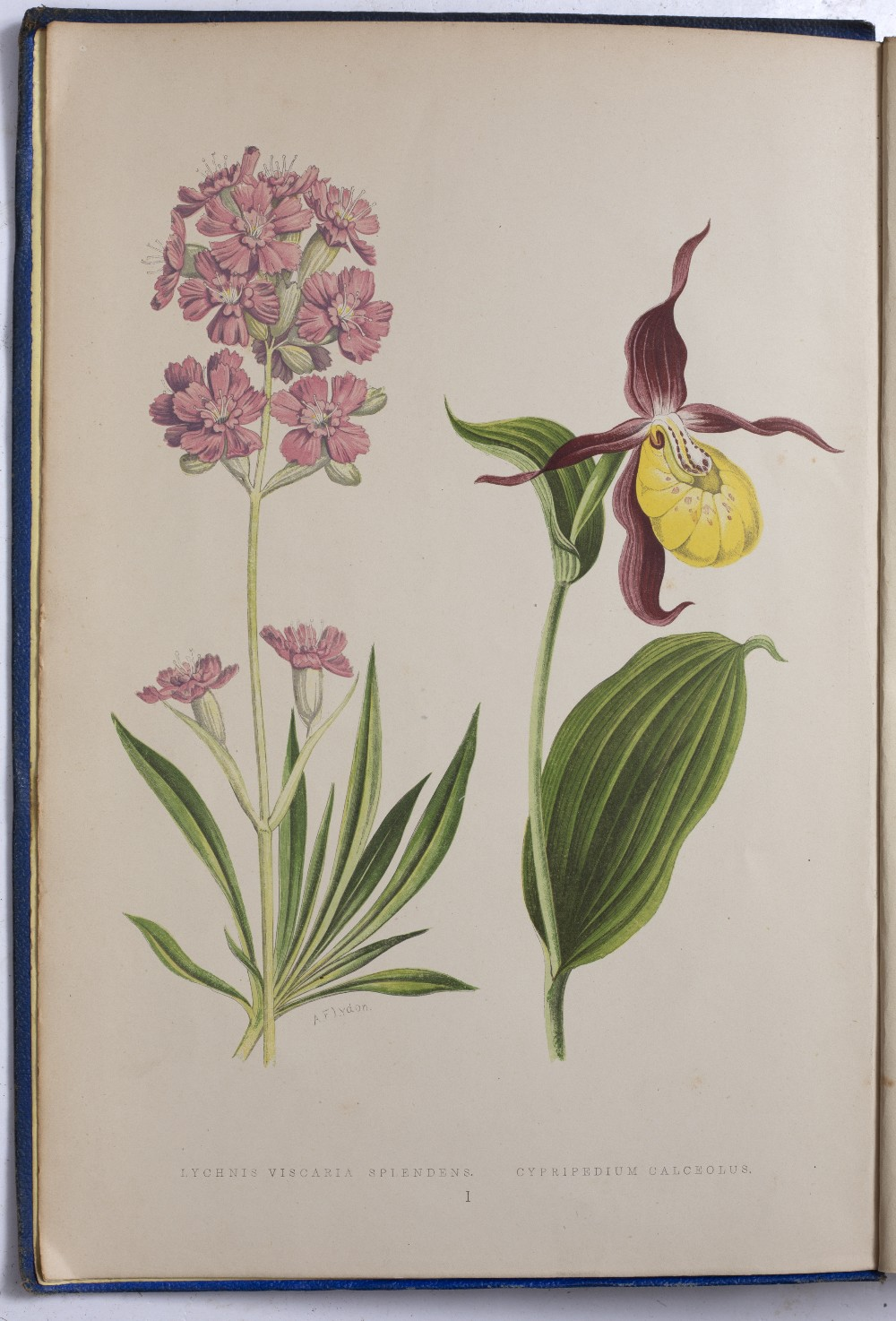 WOOSTER, David, 'Alpine Plants'. Bell and Daldy, Covent Garden, London 1882. Multiple coloured - Image 4 of 4
