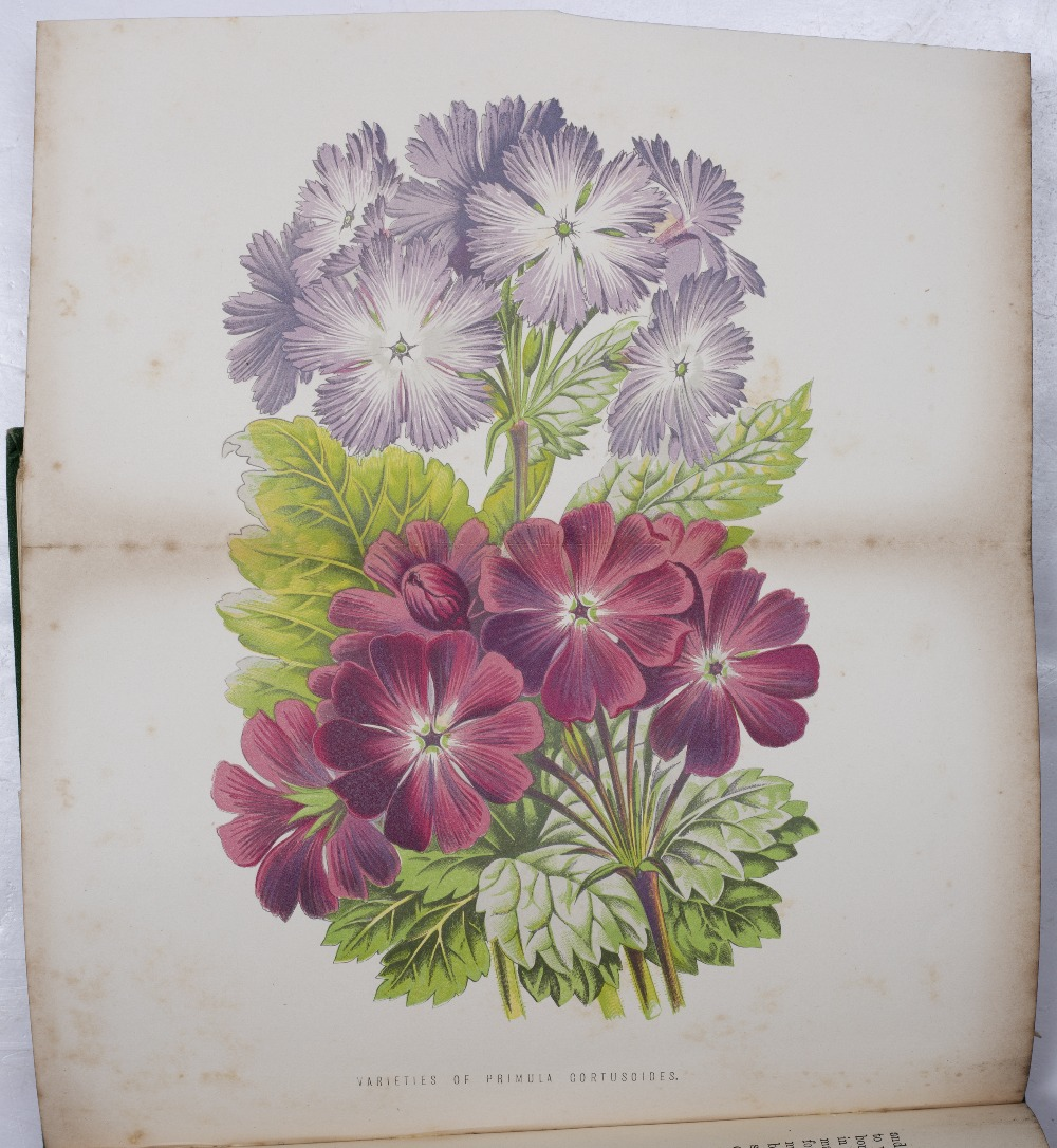 HEATH, Francis George, 'The Fern World'. Sampson et al, London 1879. 6th Ed. Numerous plates. 1/2 - Image 3 of 3
