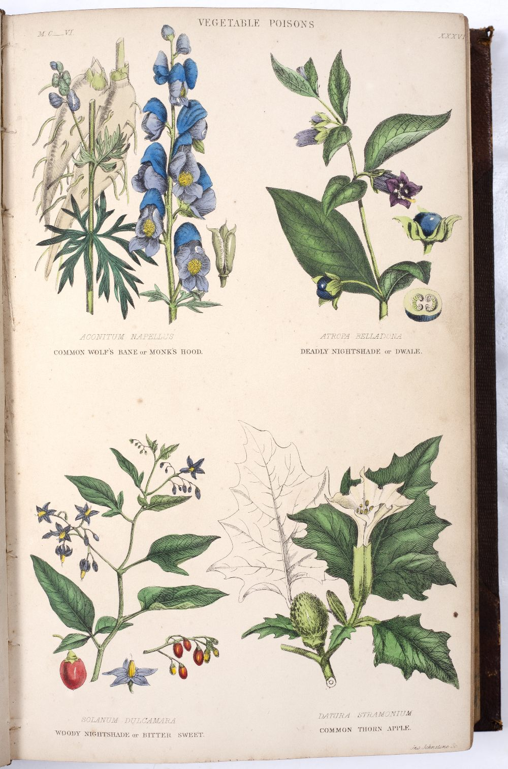 RHIND, William, A History of the Vegetable Kingdom, Blackie & Son, Glasgow and London 1857. With - Image 3 of 3