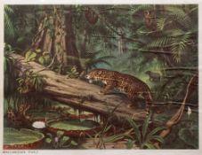AFTER M.A. KOEKKOEK 'Brasilianischer Urwald', chromo-lithograph, 63 x 84.5cm, unframed