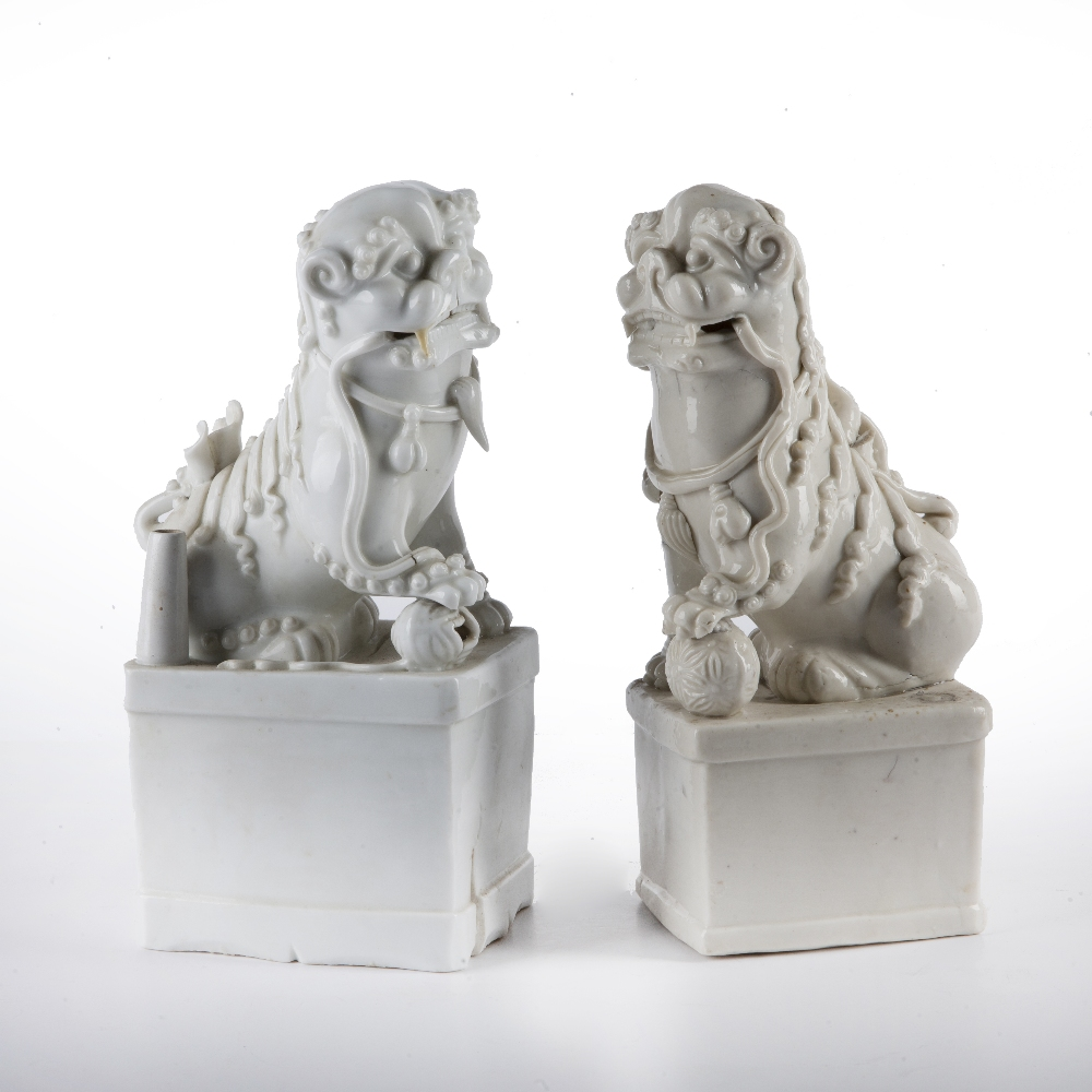 Near pair of blanc de chine dogs of fo Chinese each depicted with their paws on a brocade ball, 26.