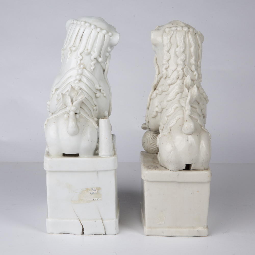Near pair of blanc de chine dogs of fo Chinese each depicted with their paws on a brocade ball, 26. - Image 2 of 3