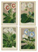 A set of four decorative framed floral prints each print 24cm x 15cm, each gilt frame 22cm high x