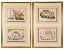 A set of four decorative flower prints depicting lilies, the prints framed as two pairs in a gilt