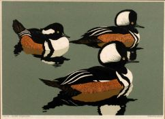 Robert Gillmor (b.1936) 'Hooded Mergansers' linocut, numbered 36/70, signed in pencil lower right,
