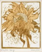 Owen Jones (Contemporary) 'Sunflower opening' linocut, numbered 1/30, signed in pencil lower