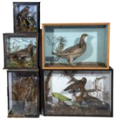 A group of five glazed old cases of taxidermic birds in naturalistic settings