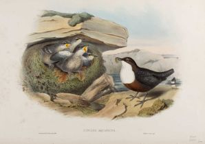 J Gould & H.C. Richter 'Cinclus Aquaticus', lithograph, hand-coloured, 38.5 x 56cm; and three