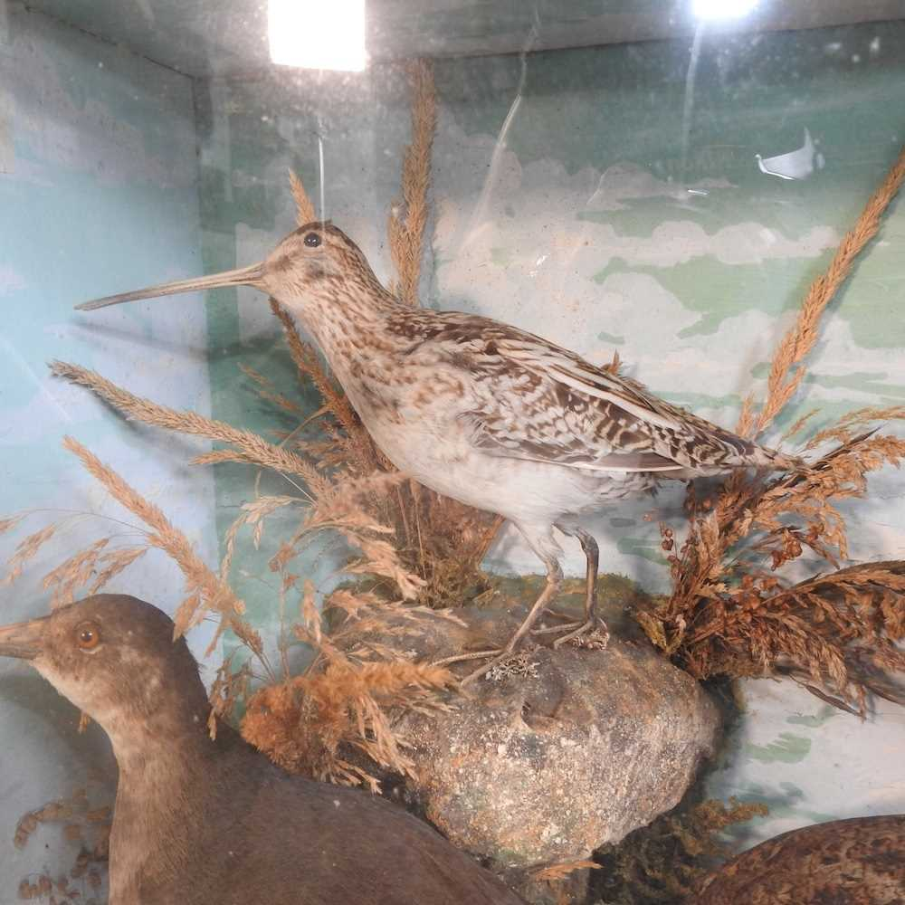 A Victorian taxidermy group of birds - Image 6 of 11