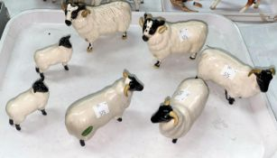 Three Beswick Black faced sheep 1765, and two black faced rams 3071 and two black face lambs 1828