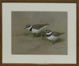 LITTLE RINGED PLOVER, A WATERCOLOUR BY ROLAND GREEN