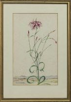 FLOWER STUDY, A WATERCOLOUR BY KATHARINE CAMERON