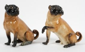 A Meissen (outside decorated) Pug and a Pug bitch, late 19th century, blue crossed sword marks,