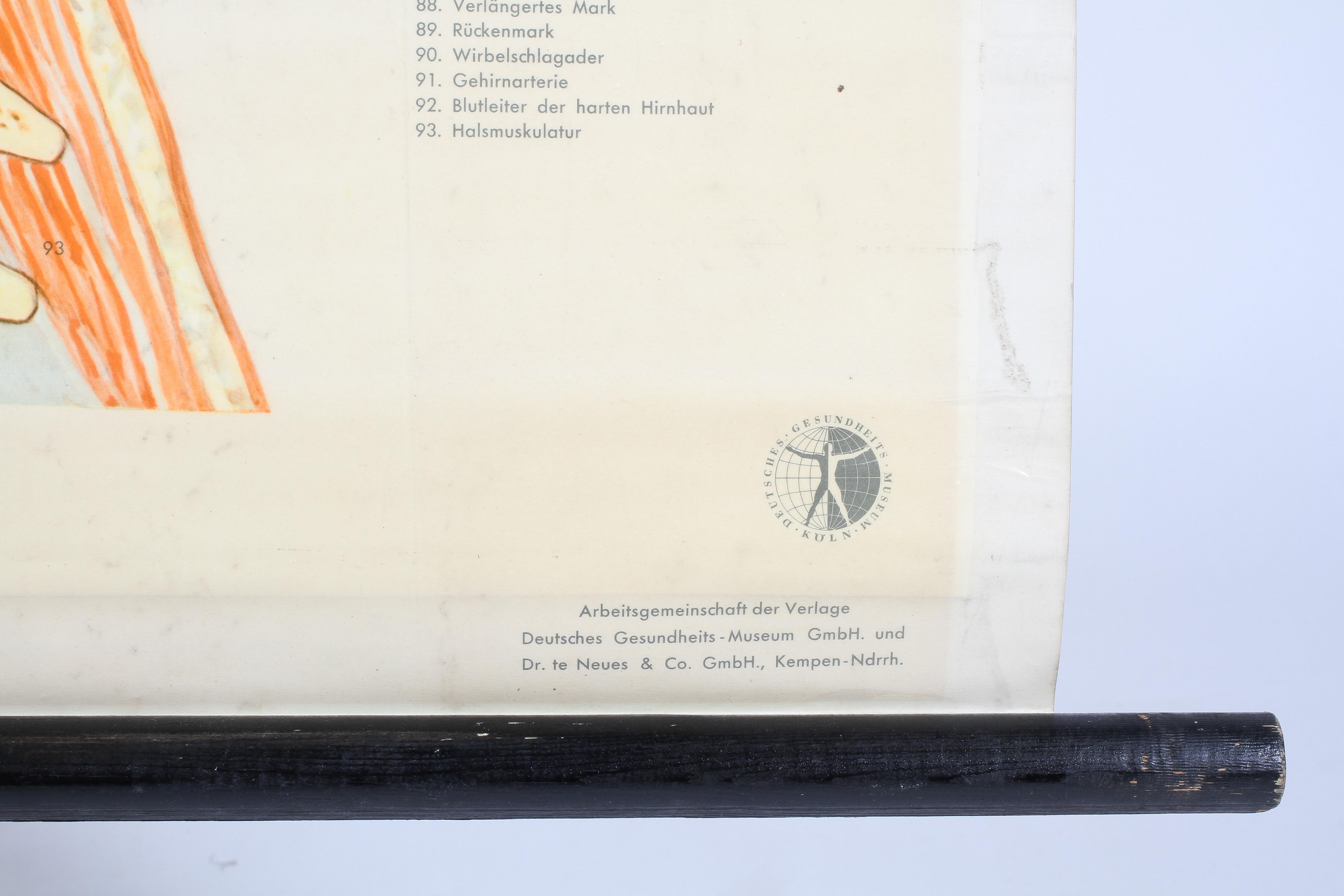 A German mid-20th century rolled anatomical chart, suspended from ebonised pole, - Image 2 of 3
