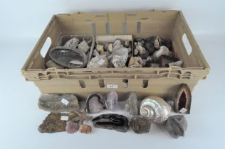 A large collection of Victorian fossils, shells,