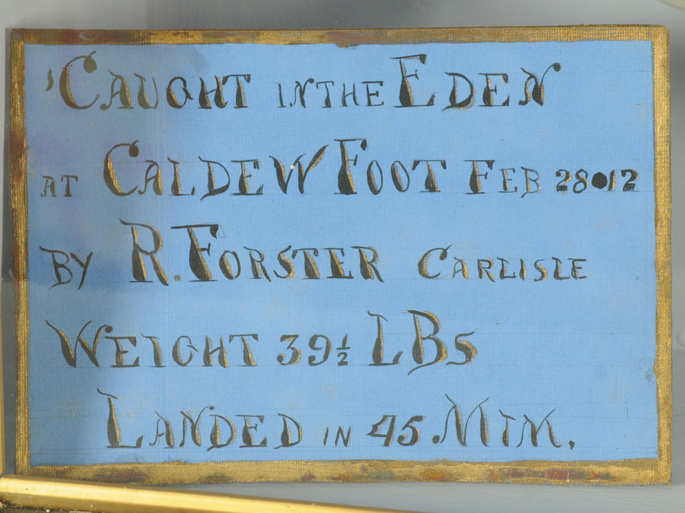"""An important taxidermy 39 lb 8 oz hen salmon """"Fly Caught on the Eden at Caldew Foot. - Image 2 of 6"""