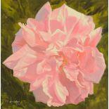William Ireland, oil on board, flower head. 52 cm x 51 cm, framed, signed.