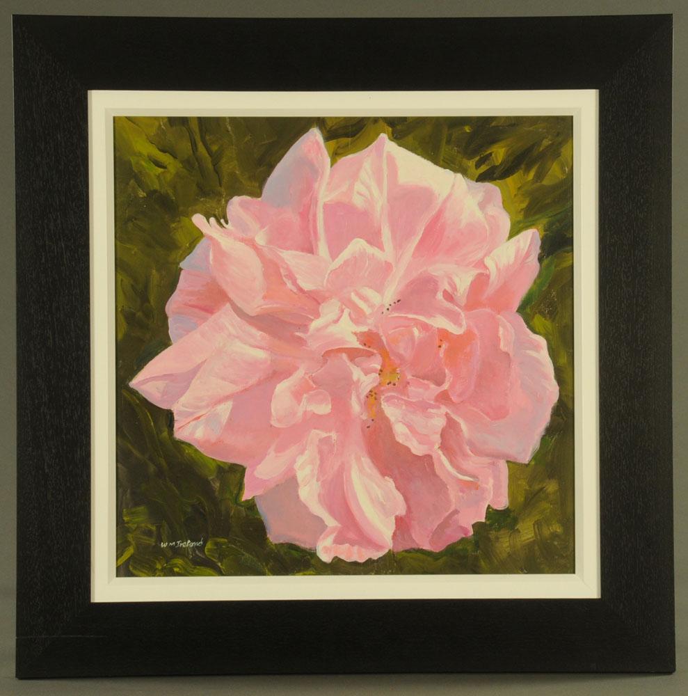 William Ireland, oil on board, flower head. 52 cm x 51 cm, framed, signed. - Image 2 of 2