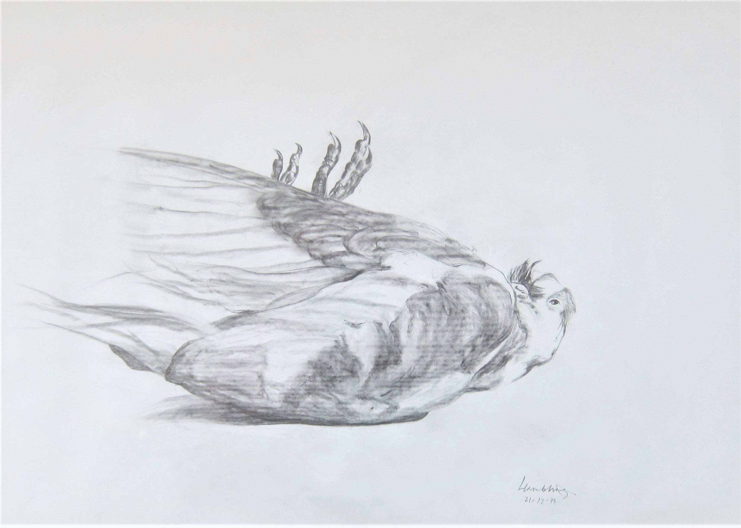 MAGGI HAMBLING C.B.E. [1945 - ]. Pigeon, Suffolk, 1973. pencil on paper; signed and dated in pencil.