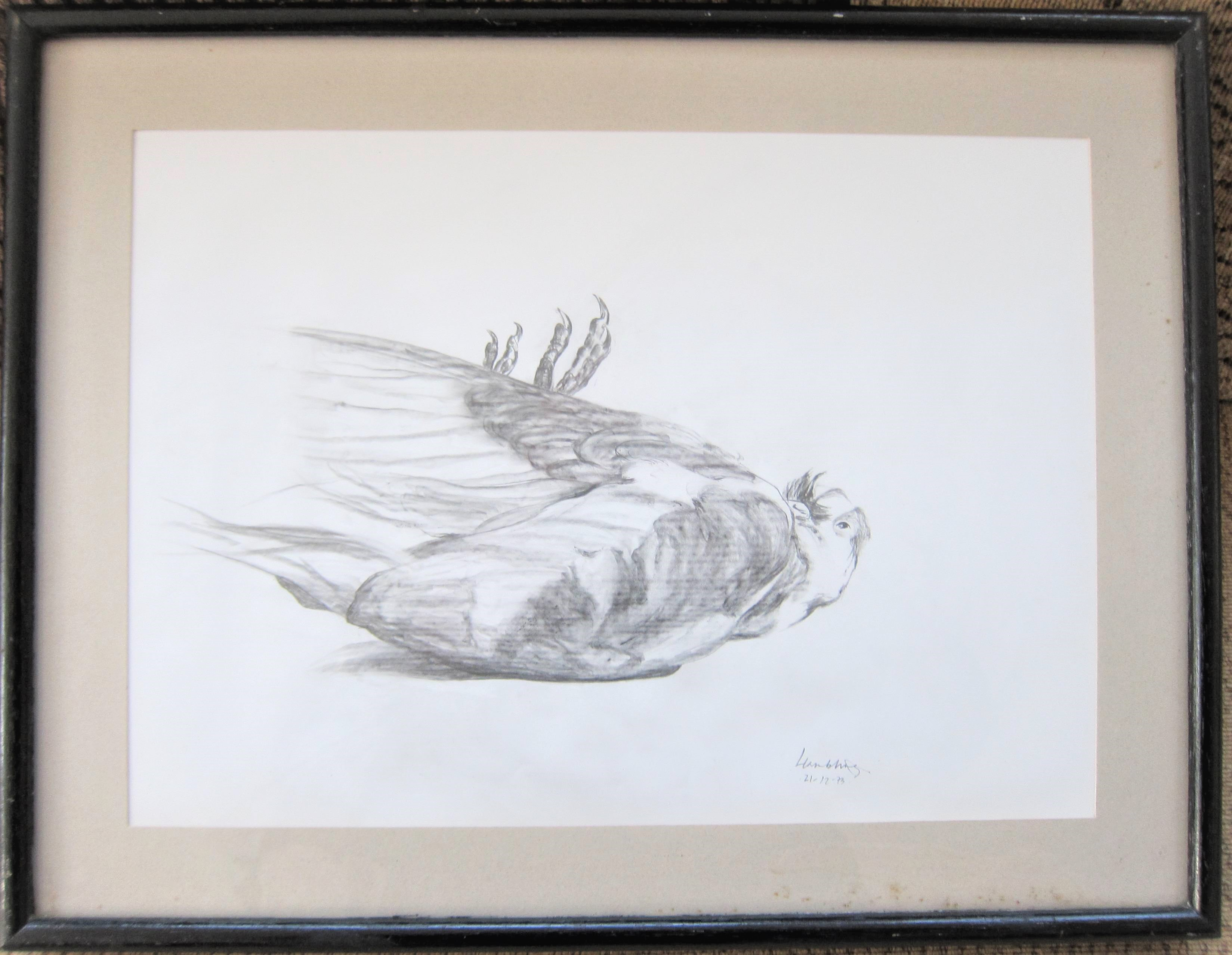 MAGGI HAMBLING C.B.E. [1945 - ]. Pigeon, Suffolk, 1973. pencil on paper; signed and dated in pencil. - Image 2 of 2