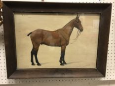 """FRANCES MABEL HOLLAMS """"Billy' """"1926"""", a study of a horse on a wood background, titled and dated"""