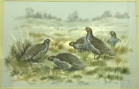 """PAUL A NICHOLAS """"Study of Grey Legged Partridge in landscape"""", watercolour heightened with white,"""