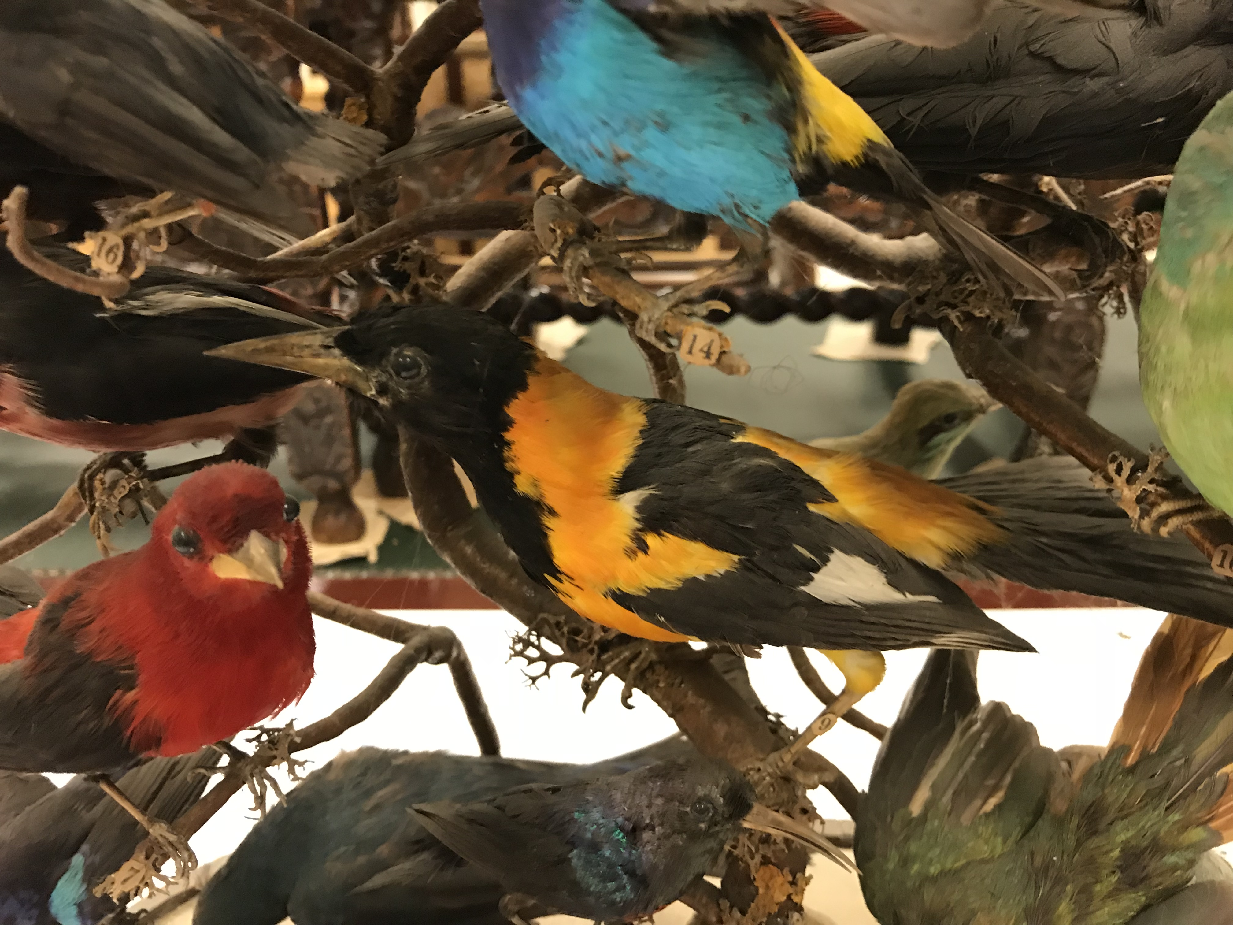 A Victorian taxidermy stuffed and mounted collection of thirty-three various exotic birds - Image 6 of 10