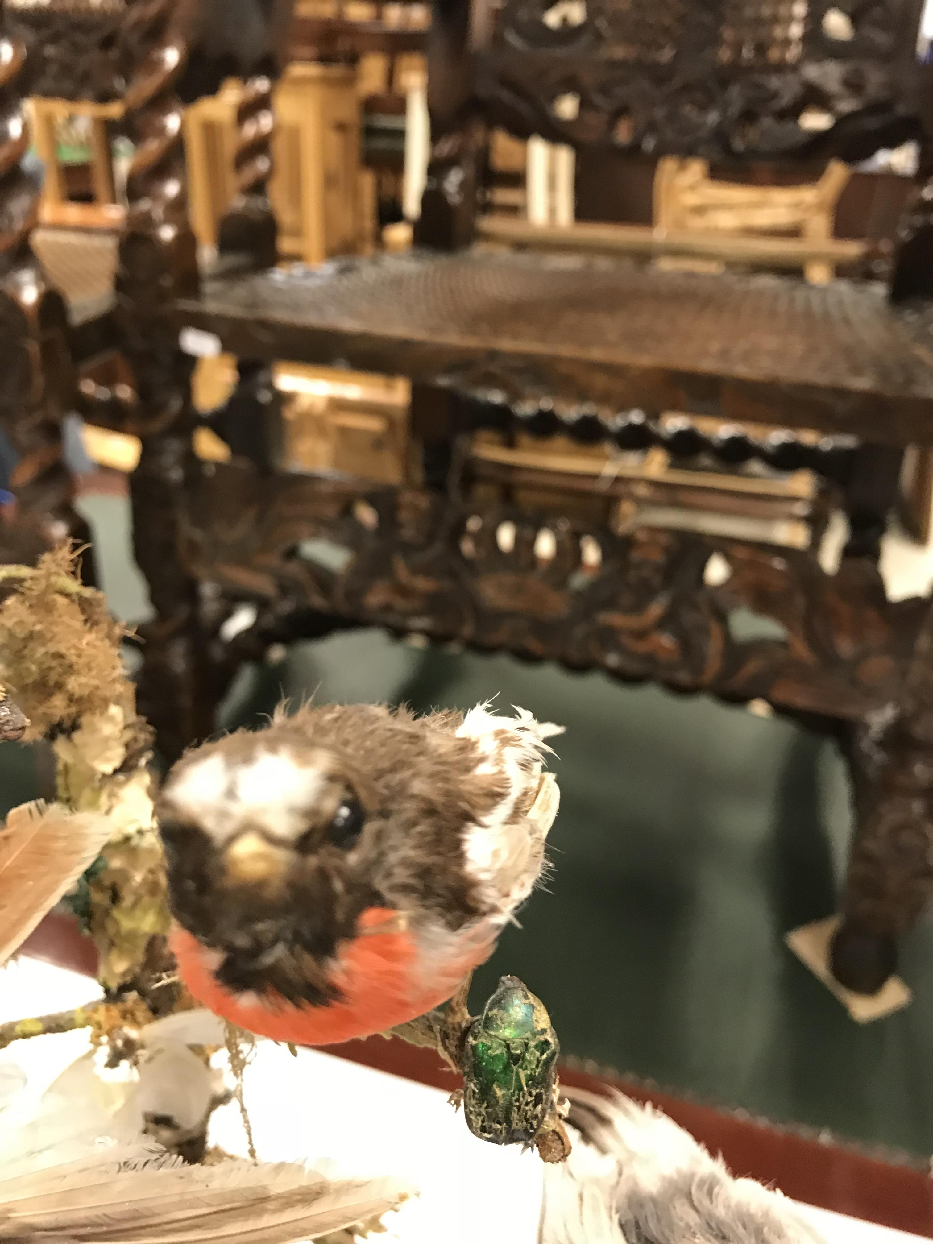 A Victorian taxidermy stuffed and mounted collection of twelve exotic birds and various beetles - Image 4 of 9