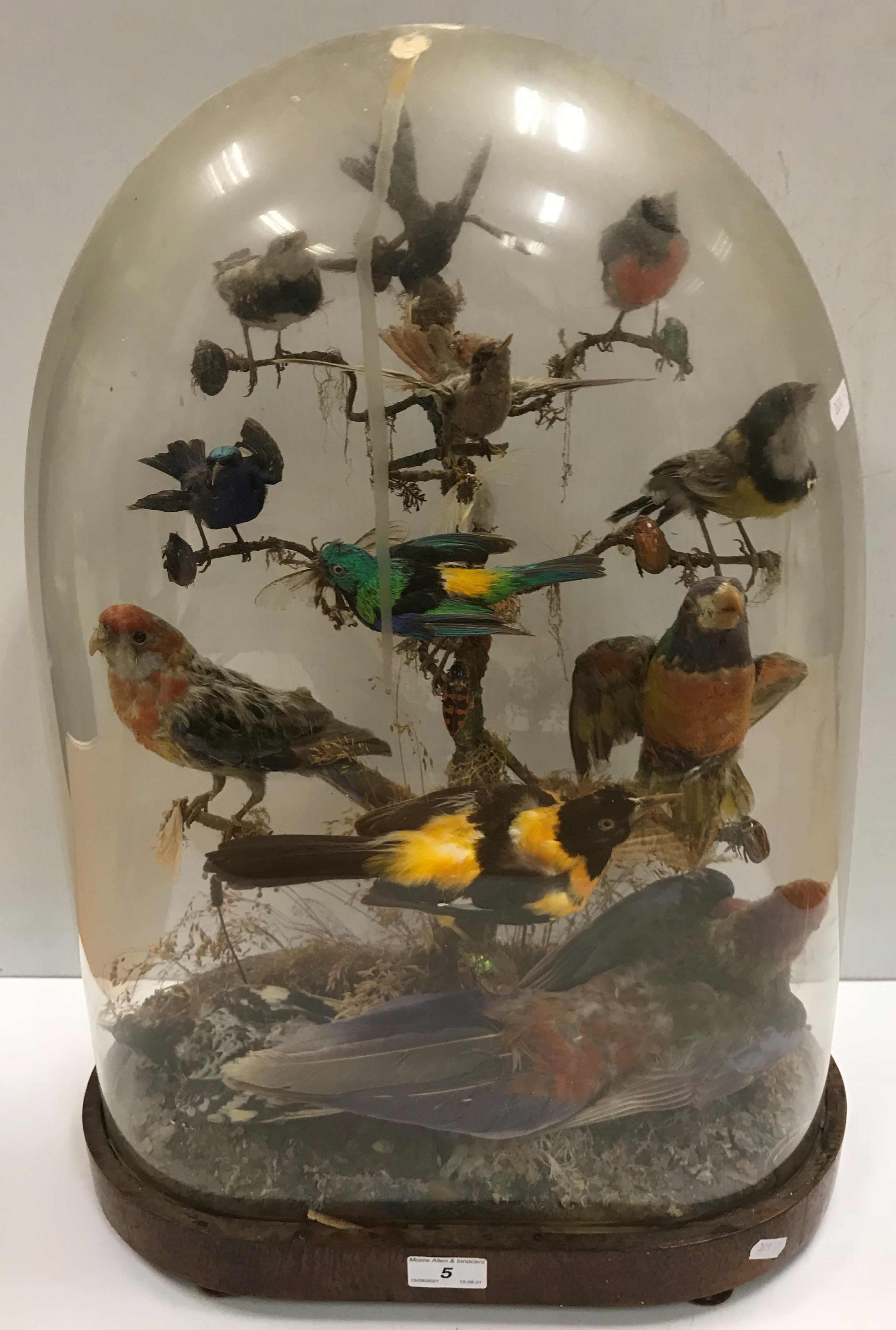 A Victorian taxidermy stuffed and mounted collection of twelve exotic birds and various beetles