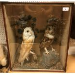 A taxidermy stuffed and mounted Barn Owl and Brown Owl with Goldcrest in a naturalistic setting