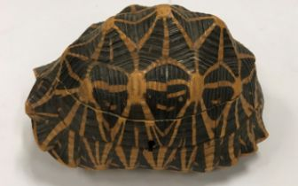 An early 20th Century mounted tortoiseshell box with parquetry inlaid decoration to the interior