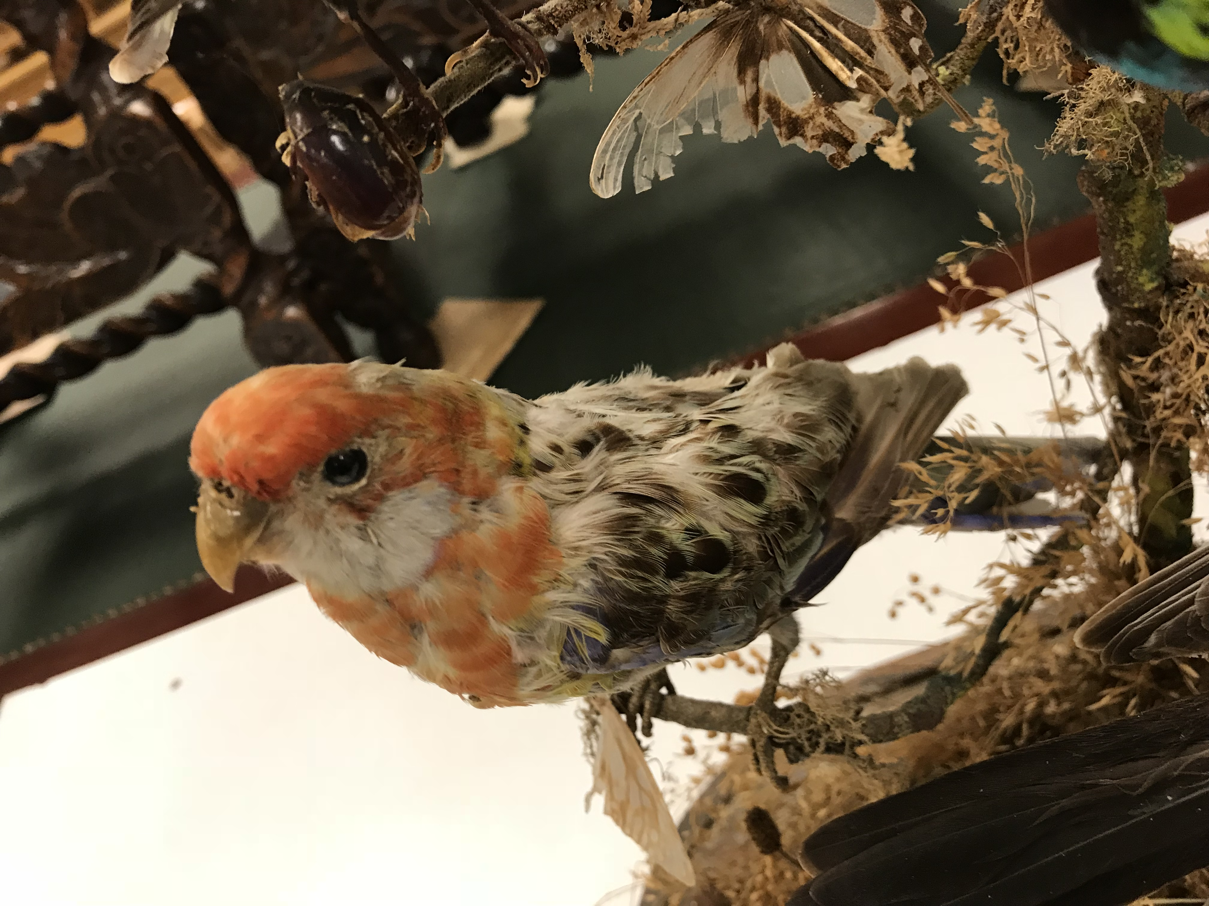 A Victorian taxidermy stuffed and mounted collection of twelve exotic birds and various beetles - Image 6 of 9