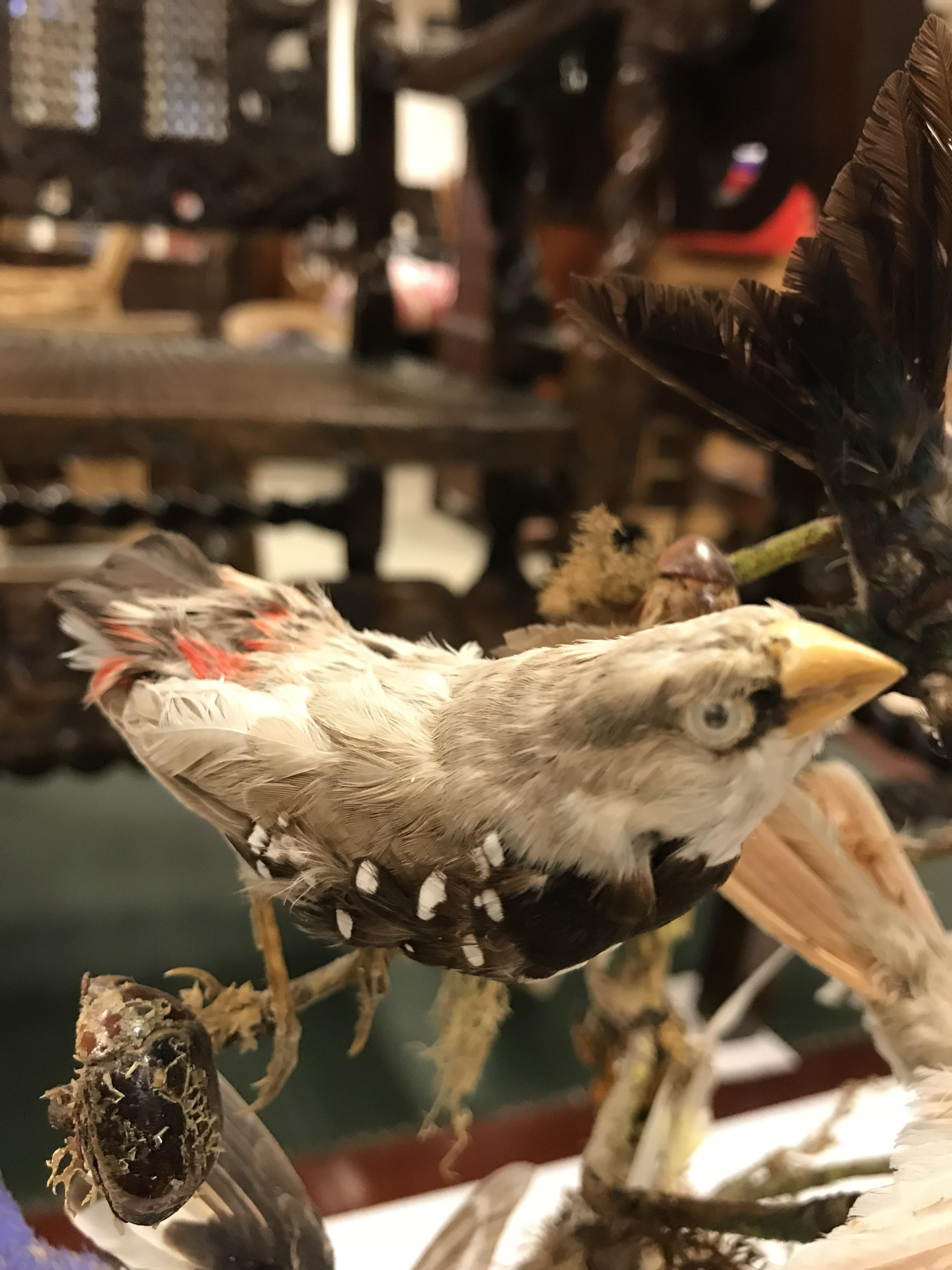 A Victorian taxidermy stuffed and mounted collection of twelve exotic birds and various beetles - Image 2 of 9