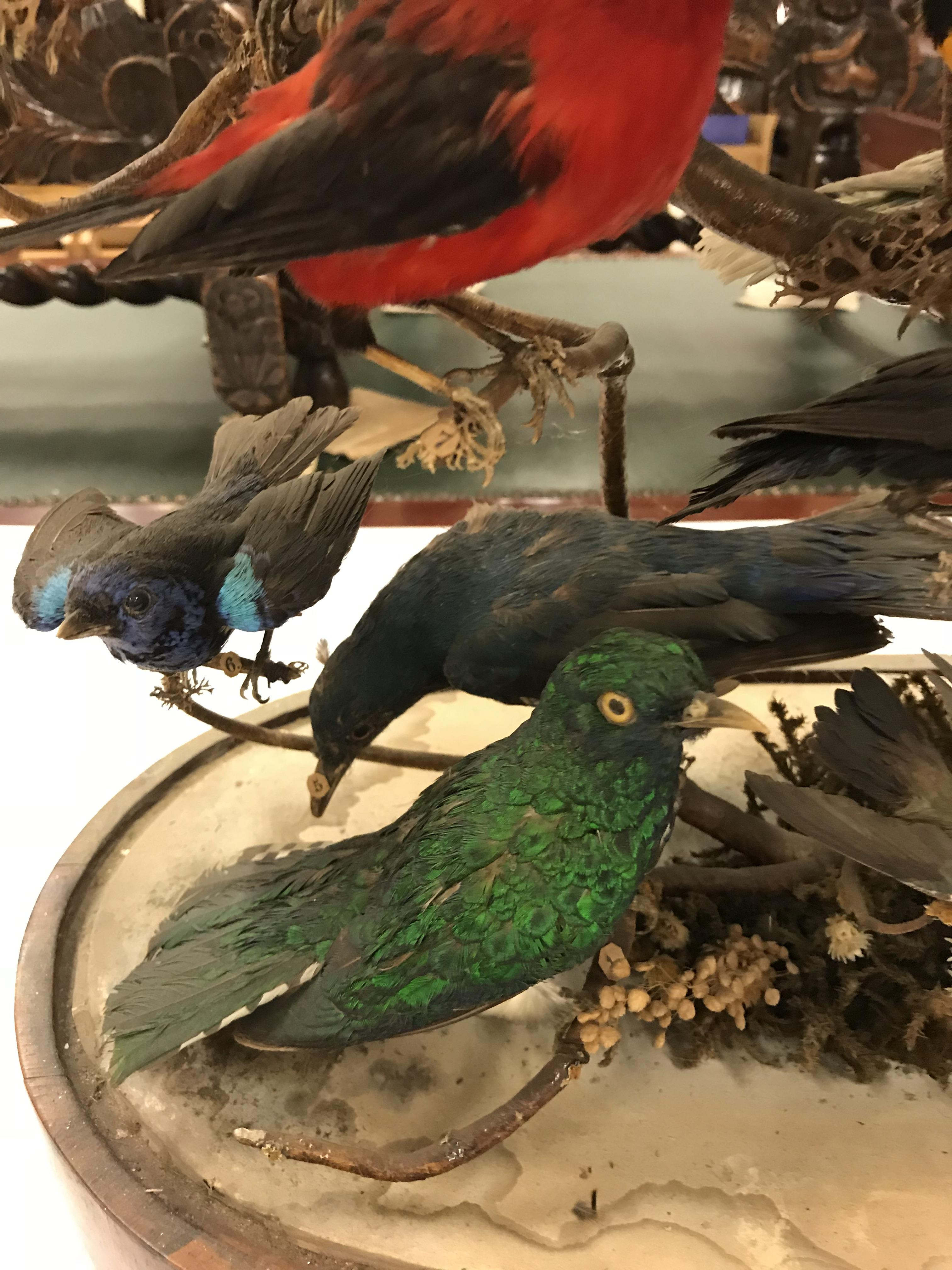 A Victorian taxidermy stuffed and mounted collection of thirty-three various exotic birds - Image 4 of 10