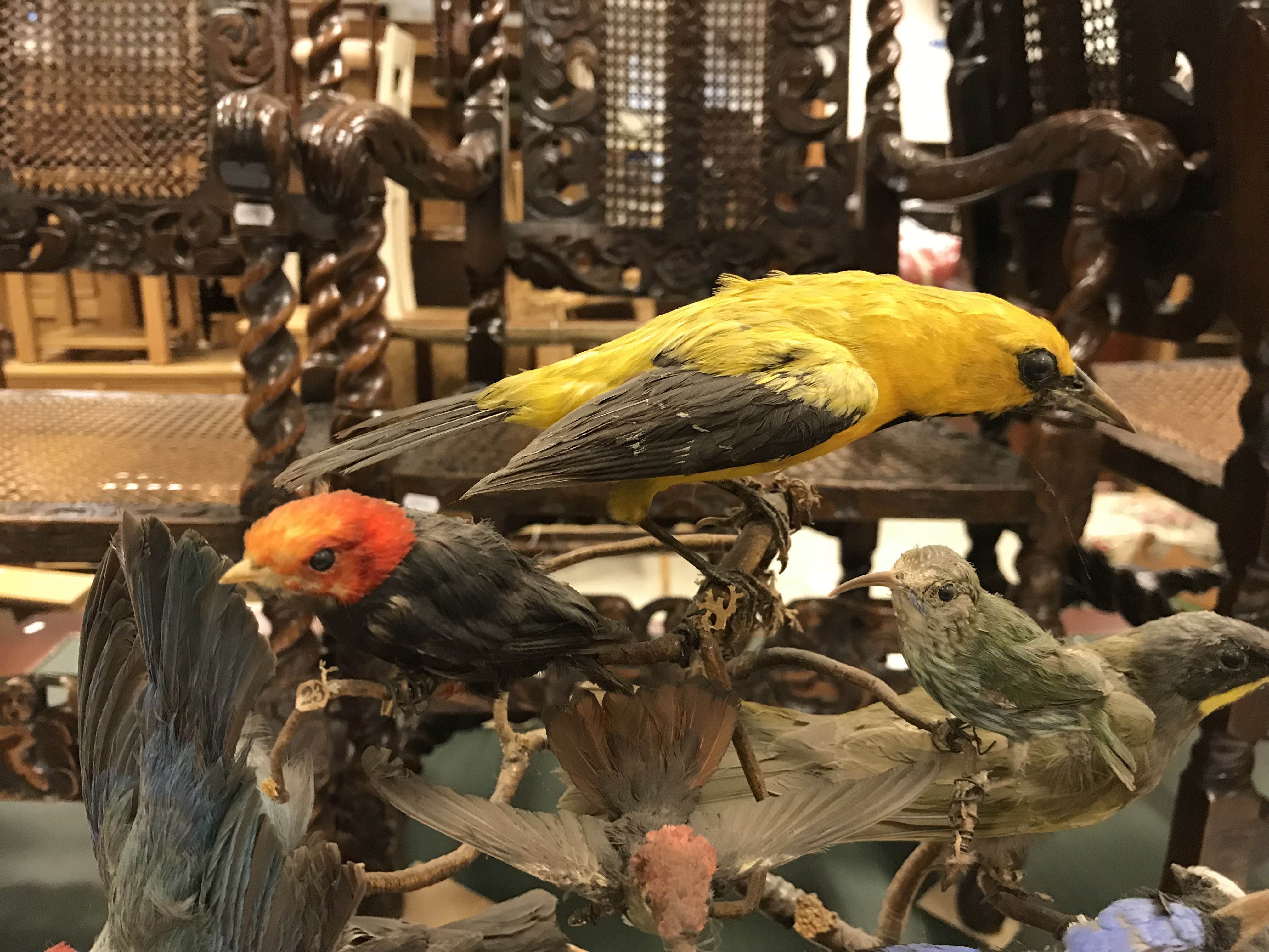 A Victorian taxidermy stuffed and mounted collection of thirty-three various exotic birds - Image 8 of 10