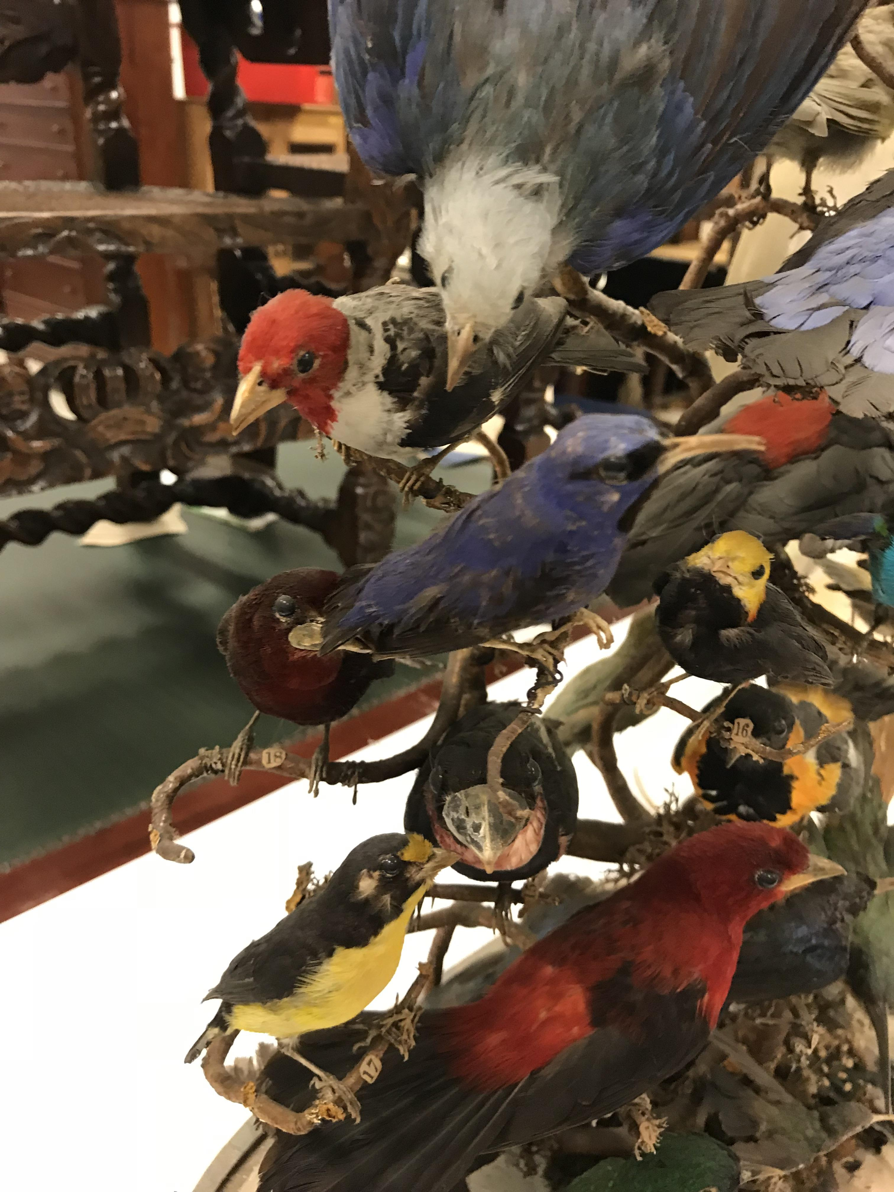 A Victorian taxidermy stuffed and mounted collection of thirty-three various exotic birds - Image 9 of 10