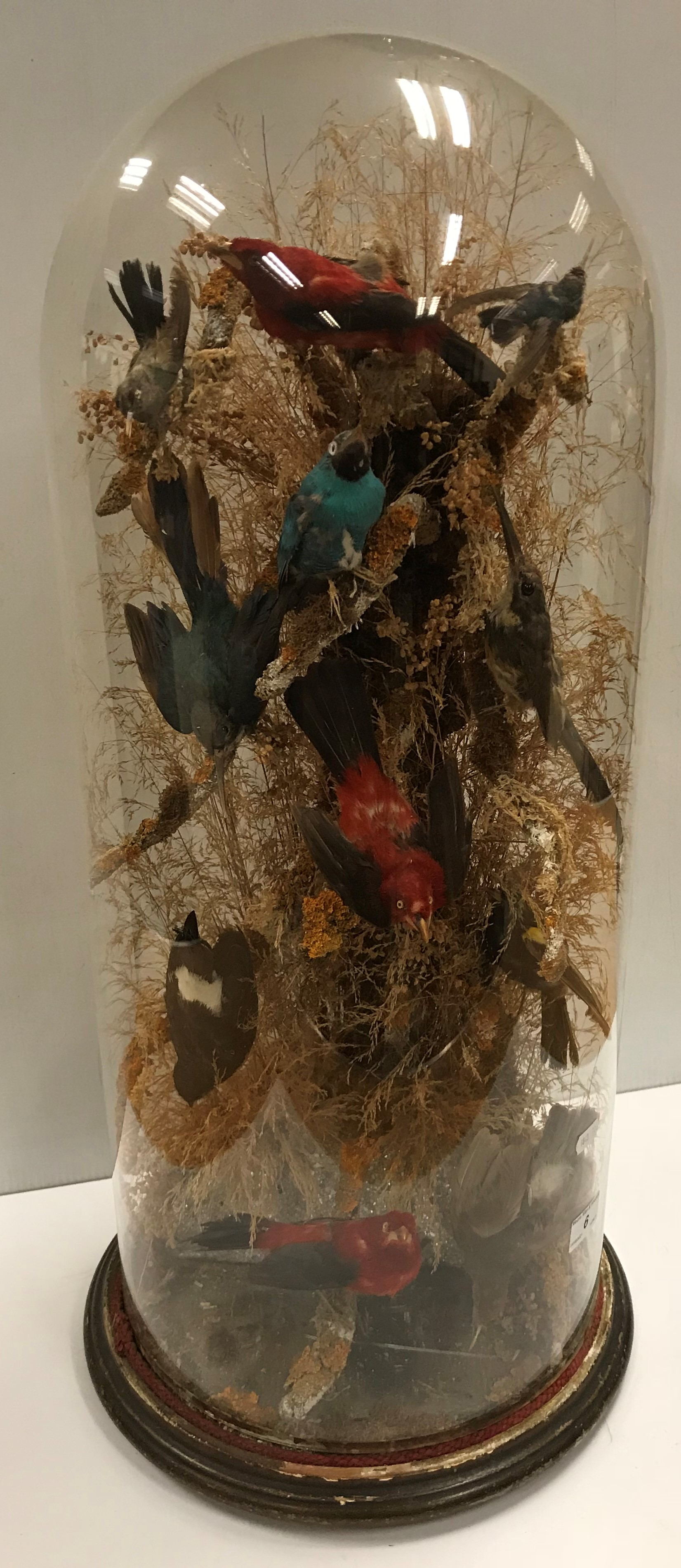 A Victorian taxidermy stuffed and mounted collection of eleven various exotic birds including