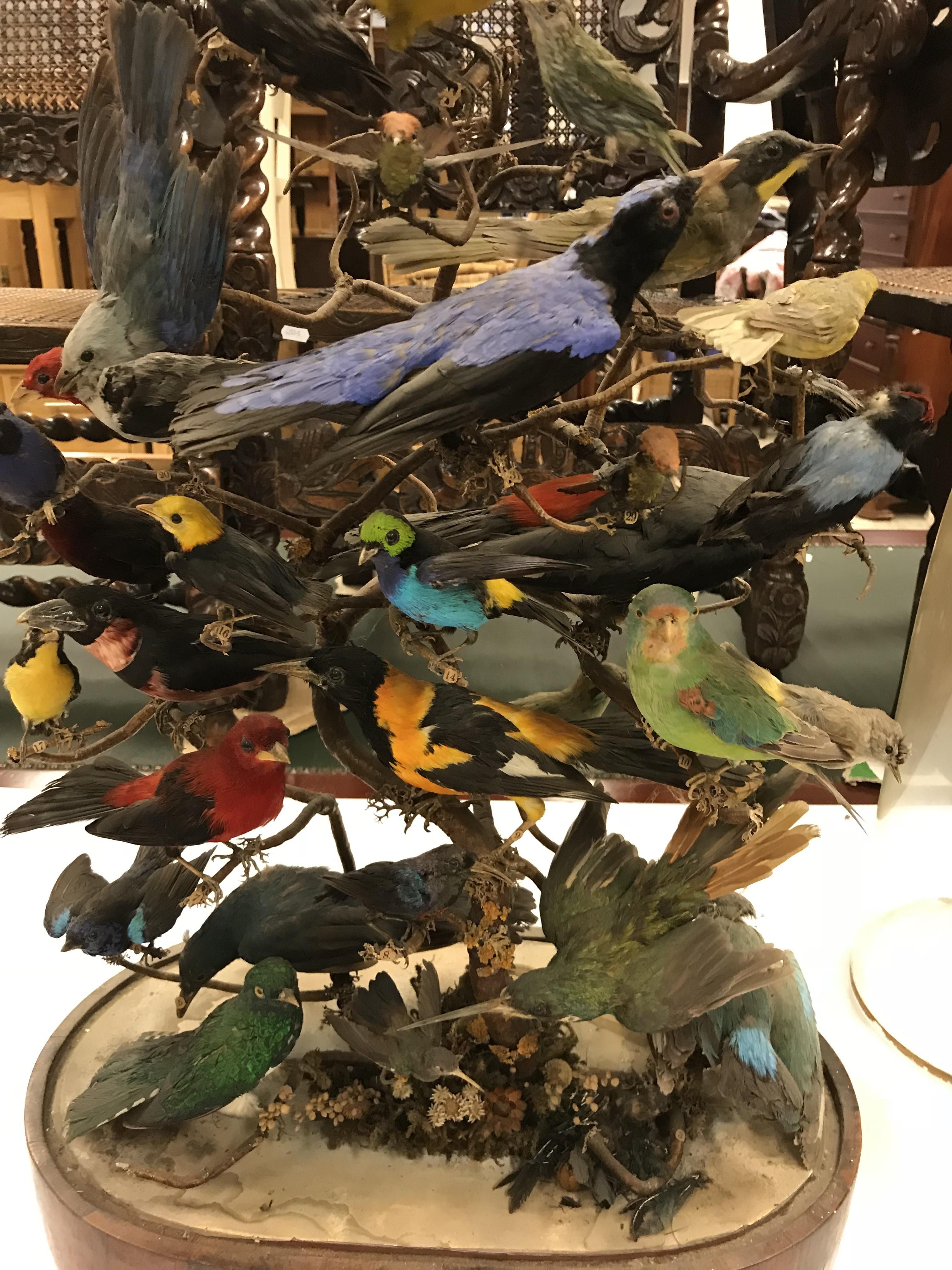 A Victorian taxidermy stuffed and mounted collection of thirty-three various exotic birds - Image 3 of 10