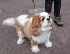 Walkies! - 5 hours of dog walking within a 5 mile radius of Cirencester-Karen Appleby