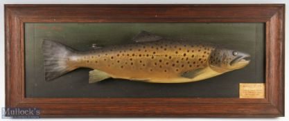 P D Malloch Perth carved wooden and hand painted full size Brown Trout – mounted on a rectangular