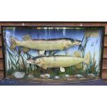 E F Spicer, Suffolk Street, Birmingham Pair of Preserved Pike – mounted in bow fronted case, with