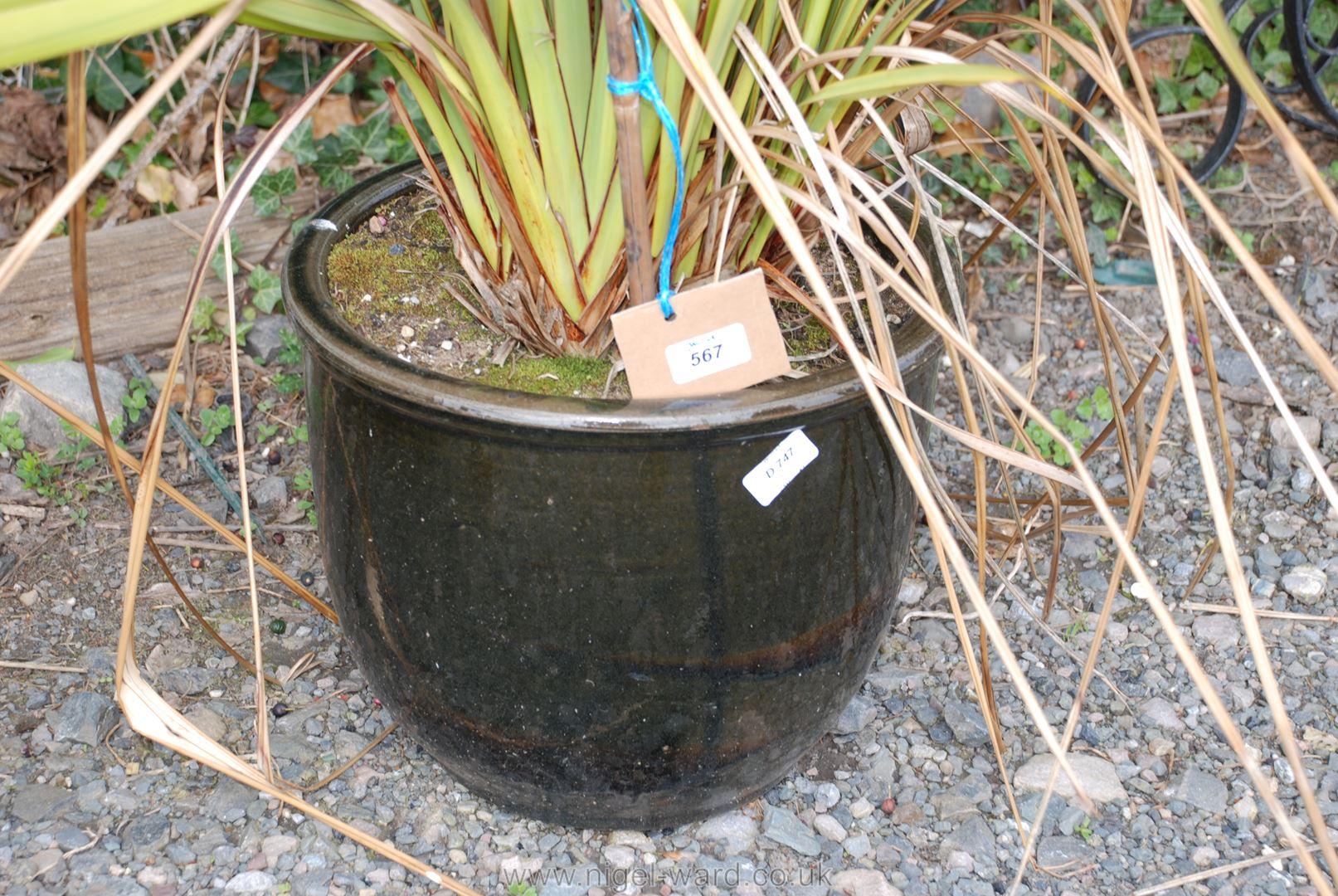 Glazed garden planter with Phormium Tenax shrub - Image 2 of 2