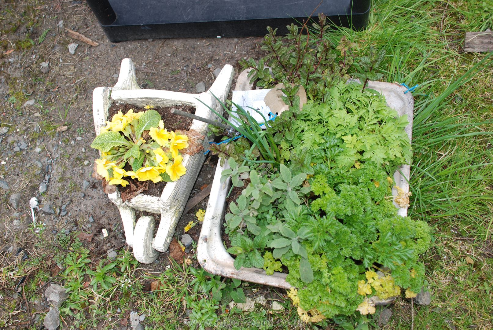 Small planted wheelbarrow and a bowl of herbs - Image 3 of 3