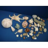 A quantity of miscellaneous shells, stones, fossils etc., including ammonites, sea urchin and geode.
