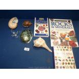 A quantity of shells including Cowrie, Pau shell,