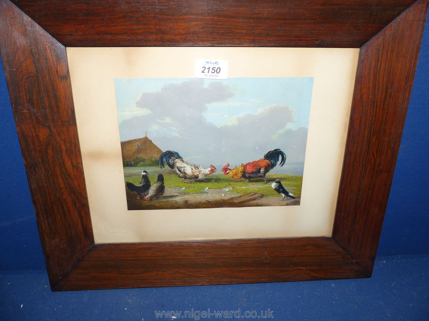 A wooden framed Lithograph depicting Two Cockerels fighting, 18'' x 15''.