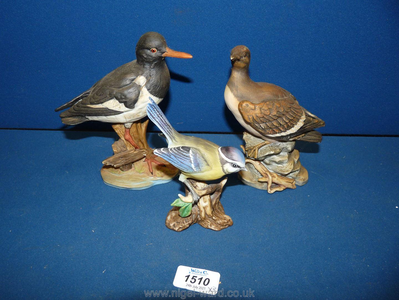 Three Mavri birds :Guillemot, Oyster catcher and Blue Tit.