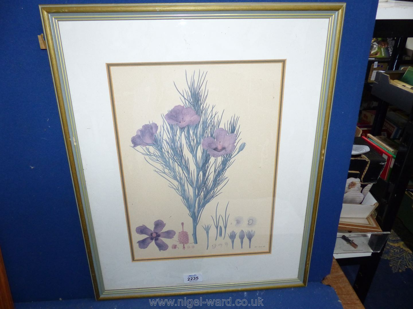 A Print of Flowers and flower Seed Heads.