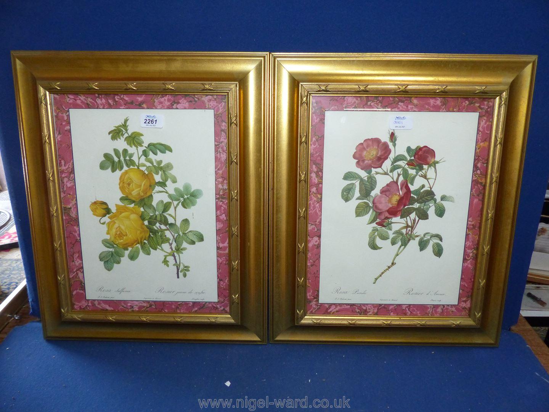 Two gilt framed floral Prints.